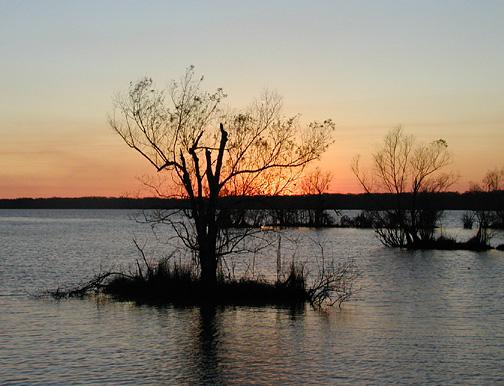 Atchafalaya swamp basin, Lousisiana
